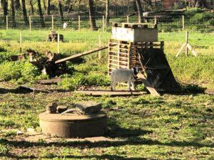 Un puits et… des animaux!